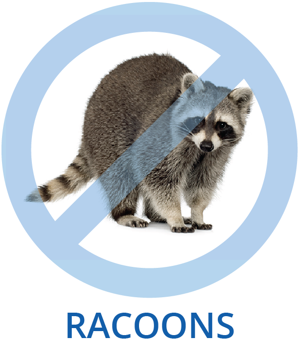 Racoon Control